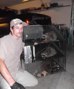 Raccoon Removal Murfreesboro Smyrna TN Raccoon Control La Vergne