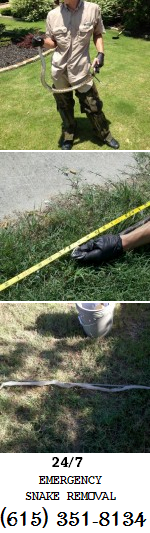 Snake Removal Murfreesboro Smyrna La Vergne Tn Snake