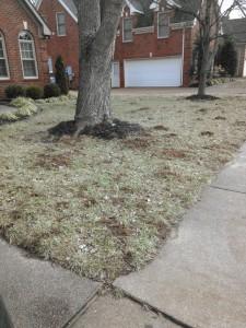 Mole Removal Damage Solutions Nolensville, La Vergne TN, Donelson, Antioch & Nashville TN